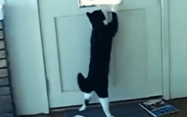 gatito antispam