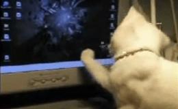 Gatito y puntero