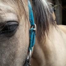 Ponyranch Arnsberg - Sommer 2016 (19)