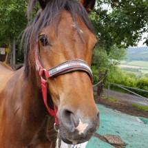 Ponyranch Arnsberg - Sommer 2016 (21)