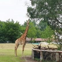 Safariland - Sommer-2019 - KiJu Neheim (10)