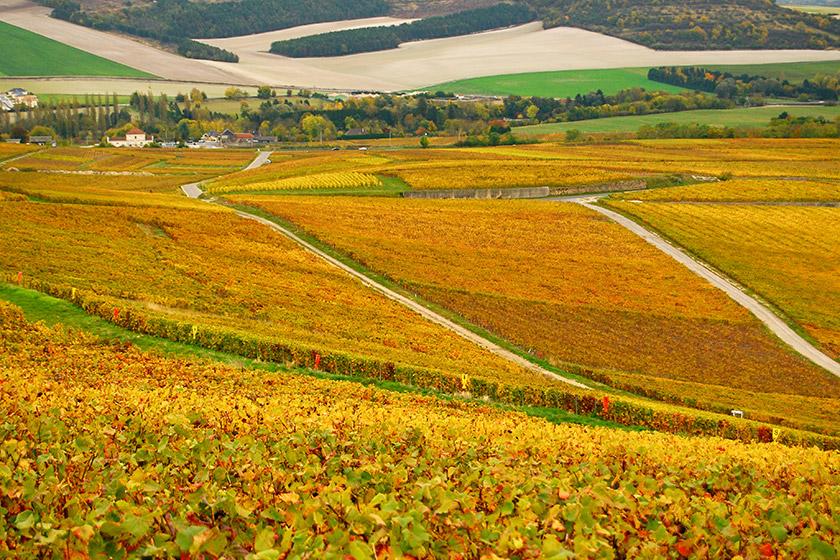 葡萄酒 bordeaux_wine