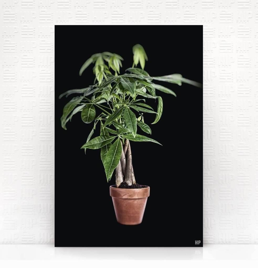 plantology