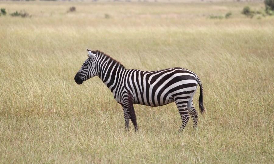 Safari Packing List