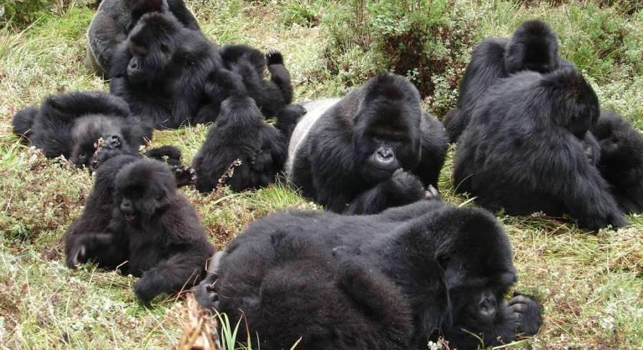 3 Day Gorilla Tracking Safari
