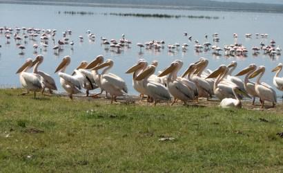 3 Day Manyara, Ngorongoro, Tarangire Safari