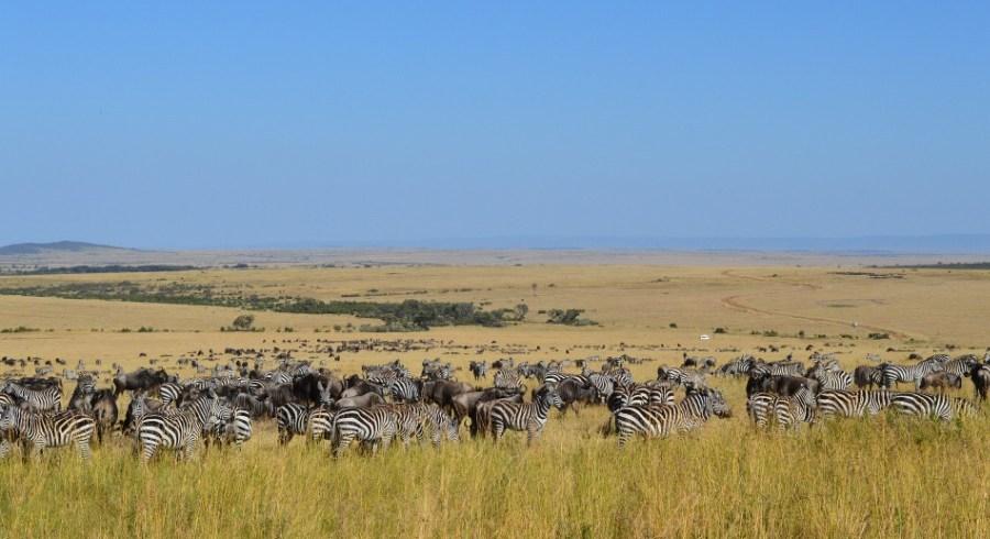Wildlife Safaris Private Tours