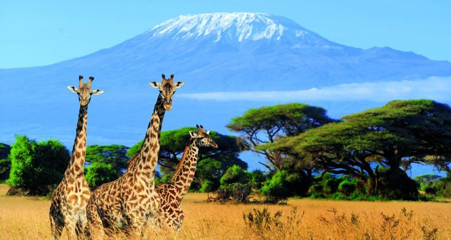 Kilimanjaro news