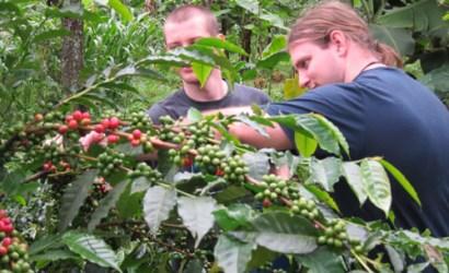 Kilimanjaro Nkweshoo coffee