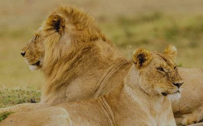 10 Days Experience Tanzania Safari & Culture Tour