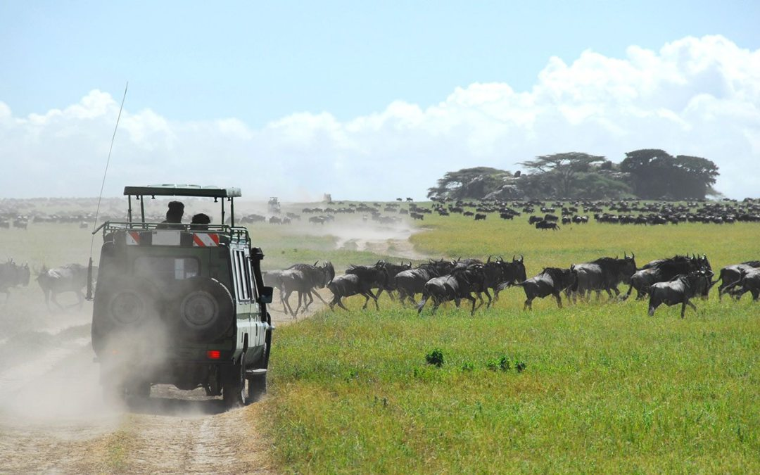 10 Days Follow The Wildebeest Migration Safari (July to October)