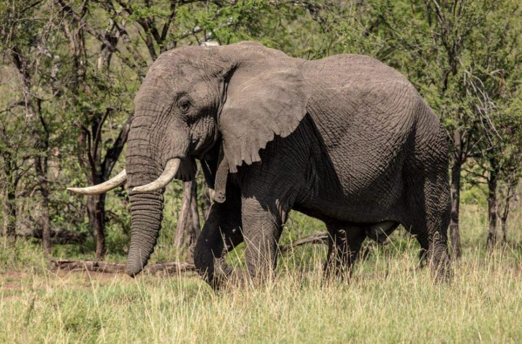 2 Day Tanzania Lodge Safari In Lake Manyara & Ngorongoro Crater