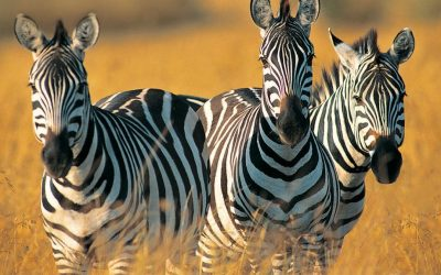 2 Days Camping Safari to Tarangire and Ngorongoro Crater