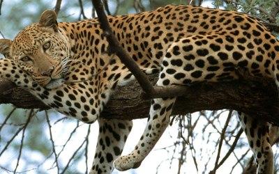 5 Days Camping Safari to Tarangire, Serengeti and Ngorongoro Crater.