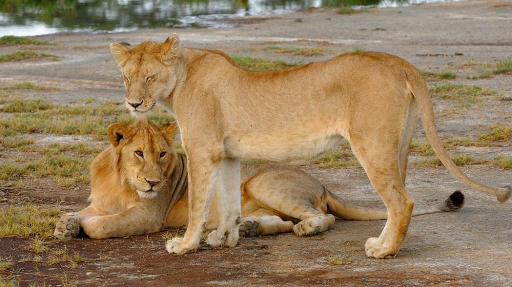 6 Days Best Of Tanzania Affordable Big Five Safari
