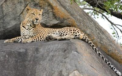 7 Days Best Tanzania Wilderness Tented Camps Safari