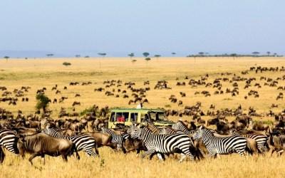 7 Days Serengeti Wildebeest Migration Group Join Safari