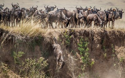 8 Days Great Wildebeest Migration River Crossing Safari