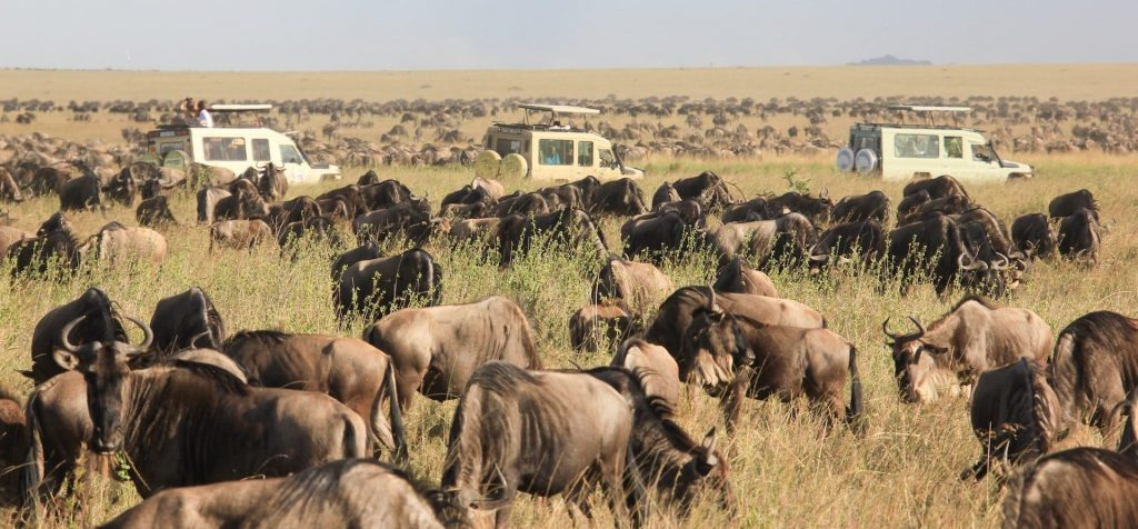 8 Days The Great Wildebeest Calving Migration Safari