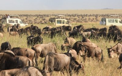 8 Days The Great Wildebeest Calving Migration Safari