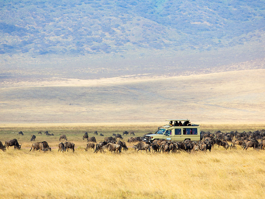 The Great Serengeti Wildebeest Migration Calendar