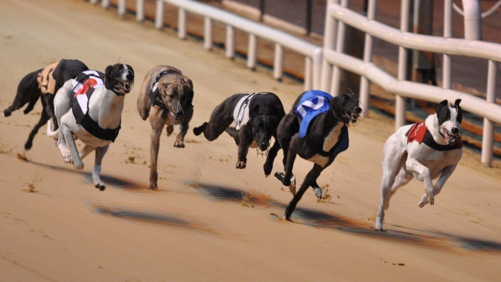 stag party/hen party greyhound racing