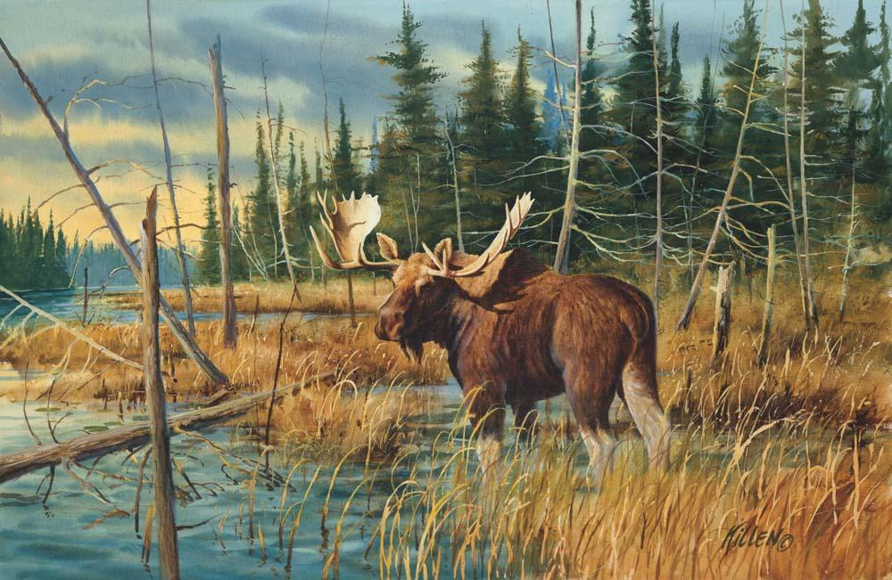 """Wilderness Pond"" Bull Moose Painting by Jim Killen"