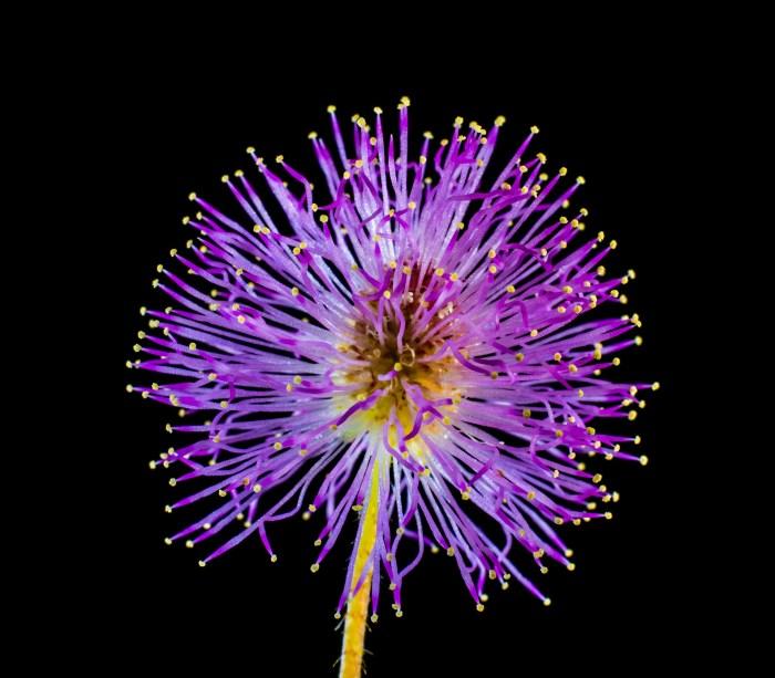 wild-flower-313114_1920