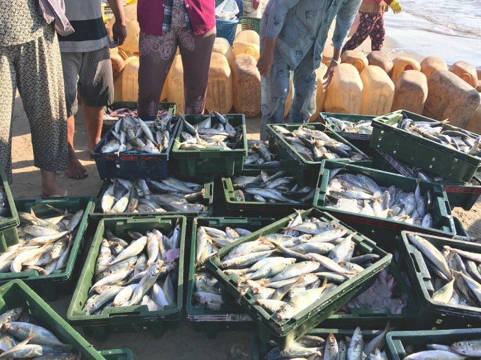 Crates of fish on dock
