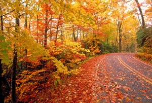 Photo of Fall Is Upon Us – Here Come The Seasonal Triggers