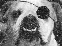 DennyX avatar