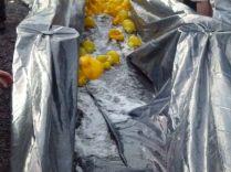 ducks2011_065
