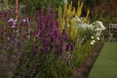 Kilmurry Nursery garden 14