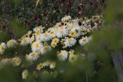 Kilmurry Nursery garden 7