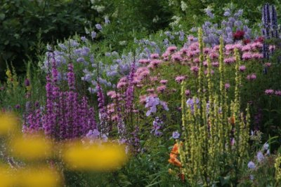 Kilmurry Nursery garden 8