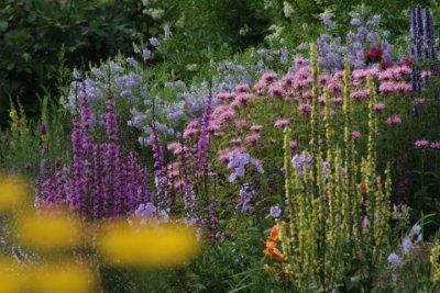 Kilmurry Nursery garden 8