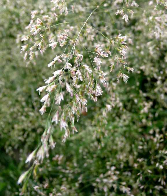 Our Plant of the Week – Grasses