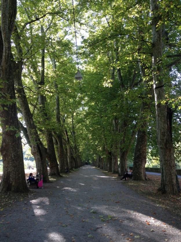 200 Jahre alte Platanenallee der Neckarinsel