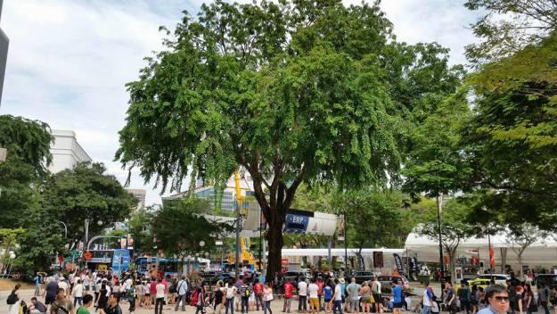 APTCC 2015 Masters Tree