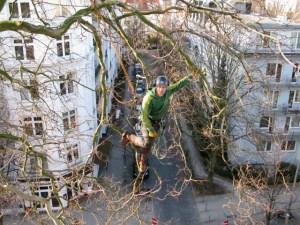 Jeremie Thomas Hamburg Altona Baumpflege
