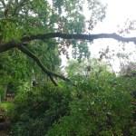 Sturmschäden Hamburg Wandsbek