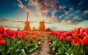 Traveling from Home: Going on safari and experiencing the blooming of tulips in the Garden of Europe