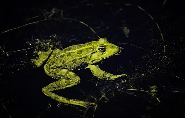 Boiling-frog-theory