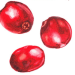 cranberry- SUPERFruits