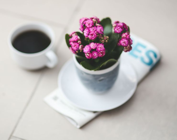 houseplants-kalanchoes-flowers-plants