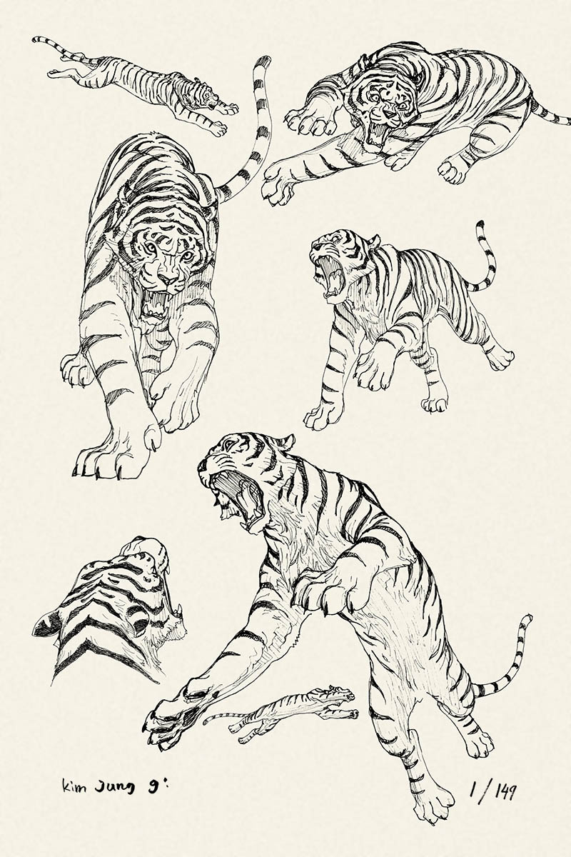 Tigers study by Kim Jung Gi