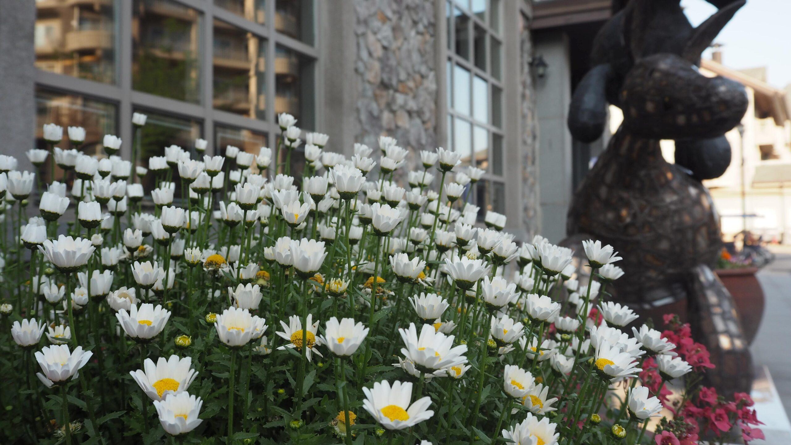 Small white daisy