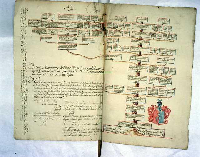 Jak wygląda drzewo genealogiczne - drzewo rodziny Jablonowskich