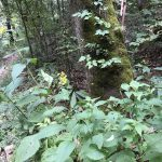 Hiking Trip part five – the waterfall