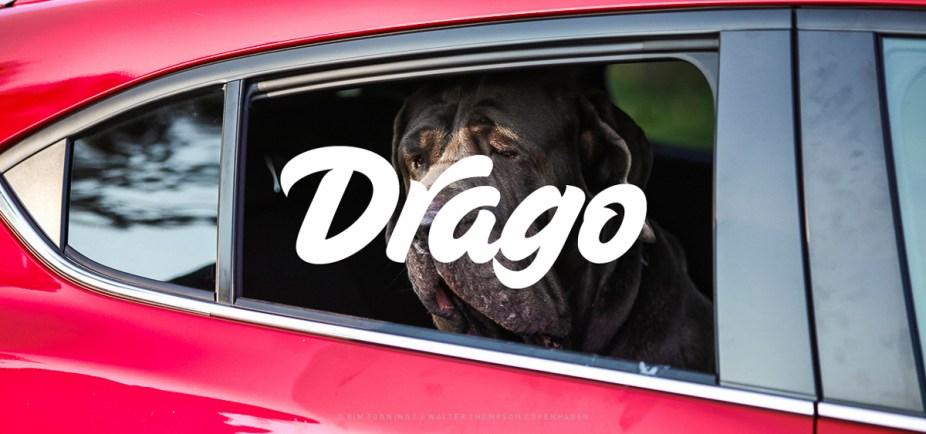 Drago_Galleri